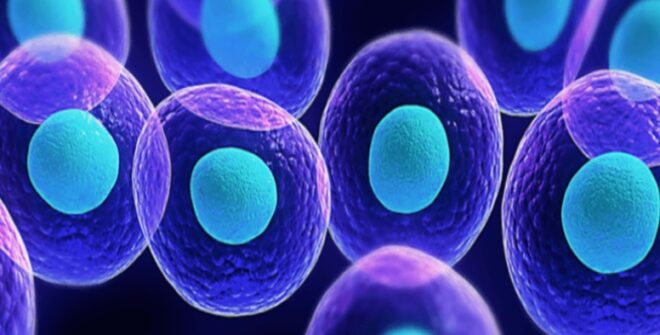 Stem Cell Therapy Shows to Repair Brain Damage and Improve Memory Function